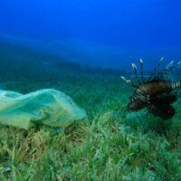 World Day without plastic bag